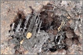 galene-les-vieux-w-dpt30-o63-730mm